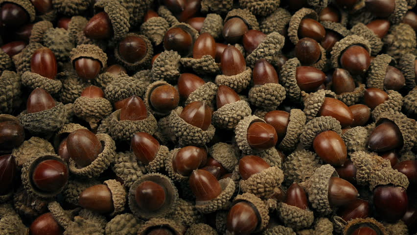 Pile Of Acorns Tracking Shot