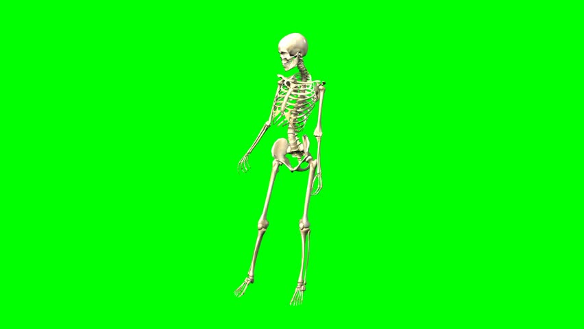 3D rendering of female skeleton rotation on chroma key background