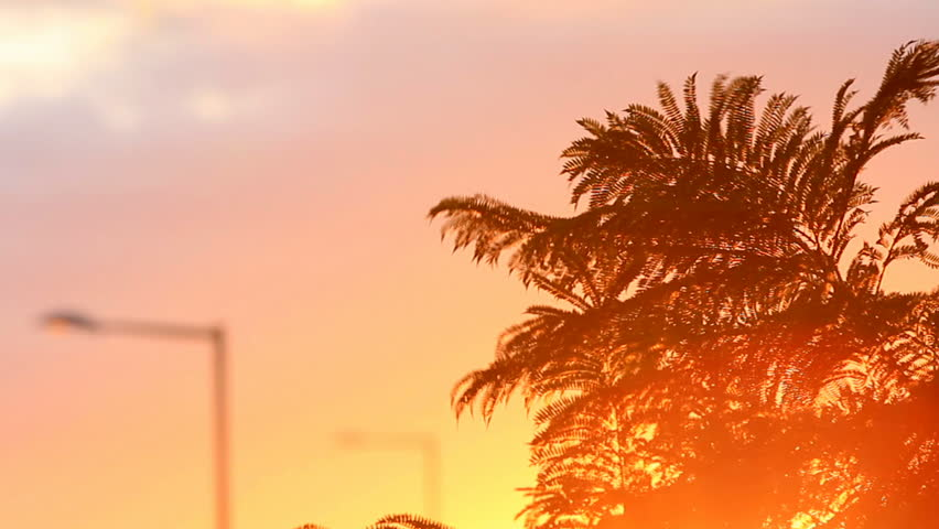 palm tree leaves blowing gently with a city representing object in the