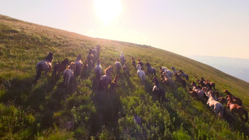 Wild Horses Herd Running On Meadow Aerial Fly Over Spring Mountains Nature Wild Life Beauty Animals Stallions Galloping Sunset Shining Adventure Freedom Ecology Concept  | Shutterstock Video #11129165