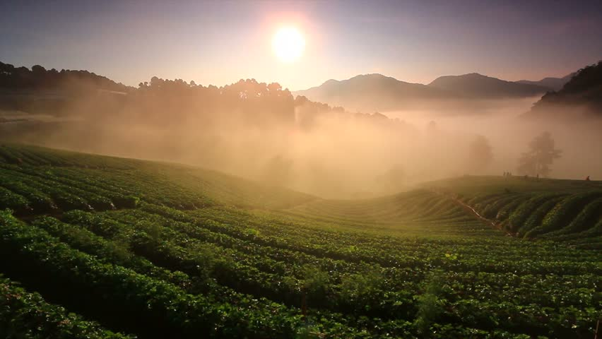 Landscape Sunrise with fog at strawberry garden In the morning at Doi Ang Khang , Chiang Mai, Thailand
