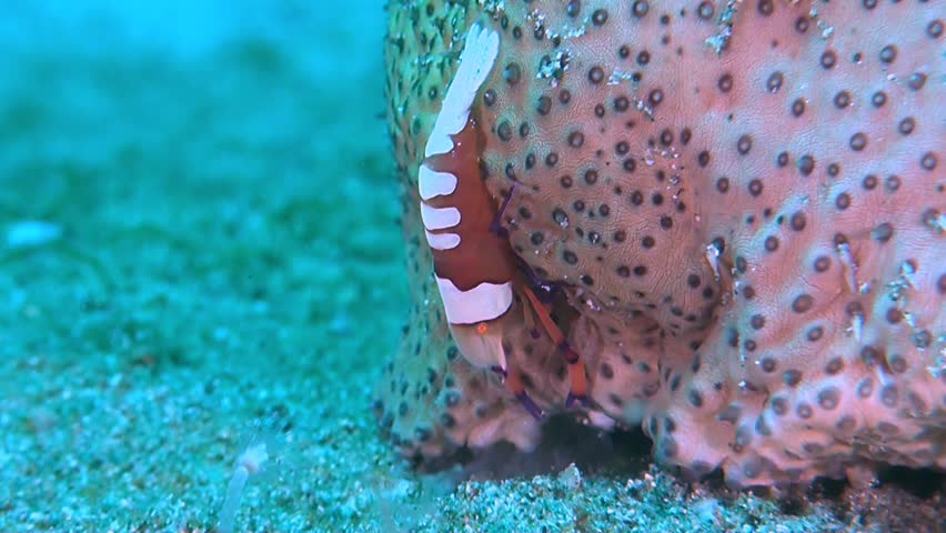 Header of amberfish