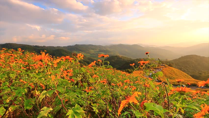 Landscape Sunset Nature Flower Tung Bua Tong Mexican Sunflower In ...