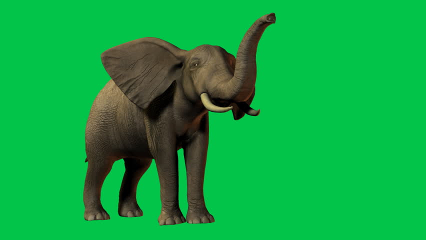 African Elephant eating and moving. Original Green screen animation | Shutterstock HD Video #1147021