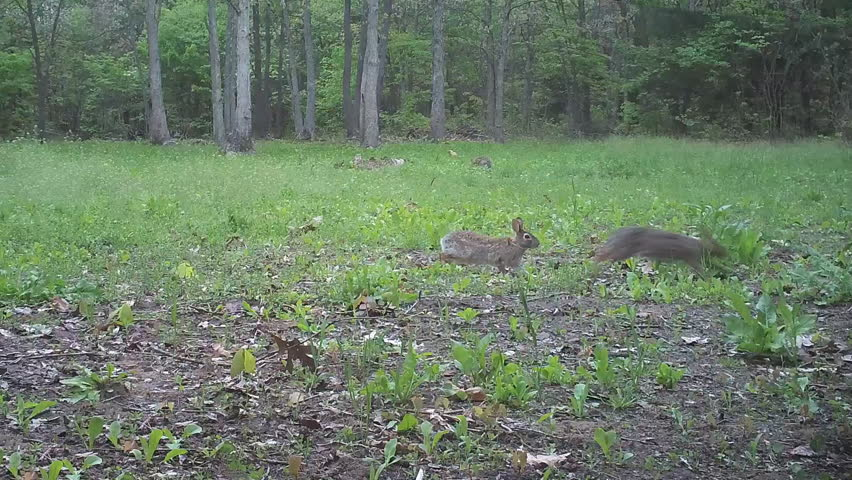 Understanding the Mating Process for Breeding Rabbits