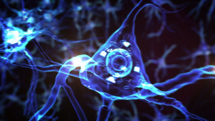 From neurons during synapses to a human head. Loopable. Biology. Dolly out. More options in my portfolio. | Shutterstock HD Video #11728721