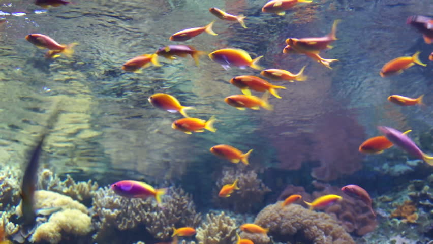 Colorful fish on coral reef red sea stock footage video for Fish swimming video