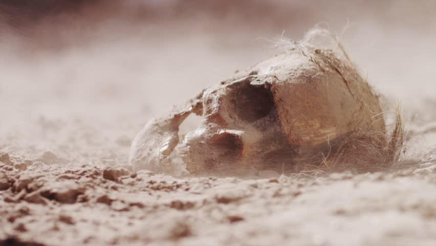 Ancient Skull in Desert | Shutterstock HD Video #11819597