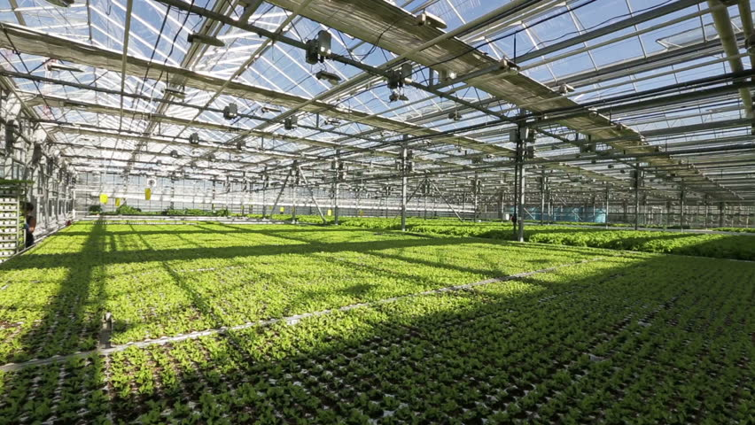 commercial light deprivation greenhouse commercial greenhouse. Black Bedroom Furniture Sets. Home Design Ideas