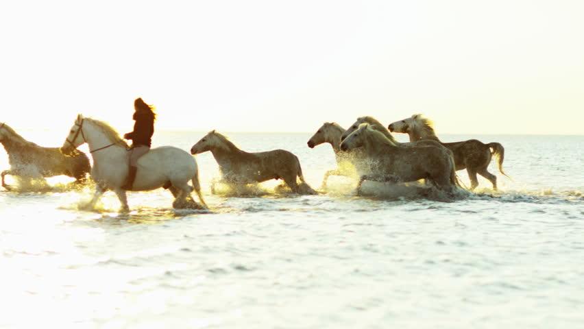 Animal horses sunset grey livestock female rider cowboy sea Mediterranean nature Camargue, France outdoors marshland freedom RED DRAGON | Shutterstock HD Video #12329606