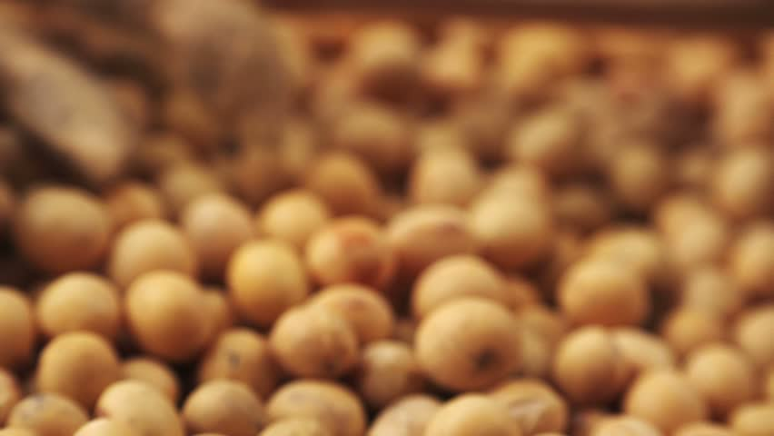 genetically modified soybeans For omega-3 soybeans and you'll get more than a bunch of genetically modified plant embryos — monsanto provides detailed instructions about.