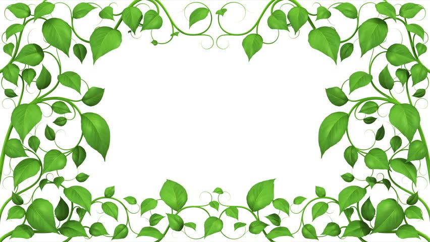 Green Leaves Growing Pattern. HD 1080. Alpha Mask.