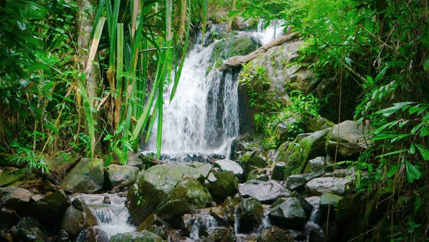 Asian rainforest water