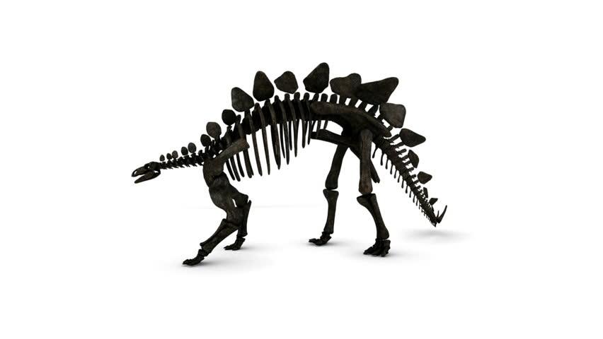 Stegosaurus Skeleton Rotating
