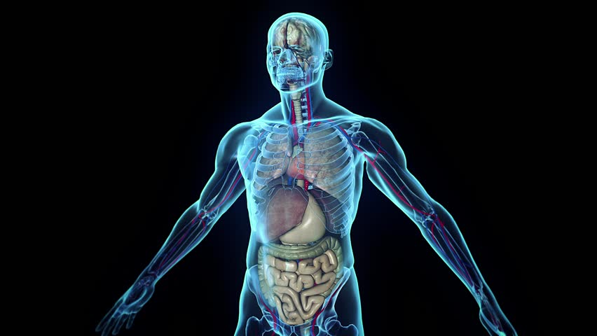3D human body in loop rotation