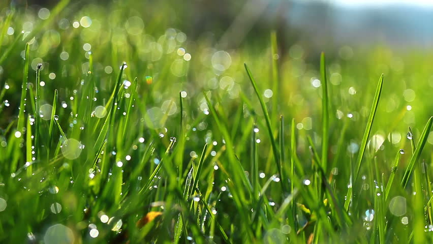 Image result for dew covered grass