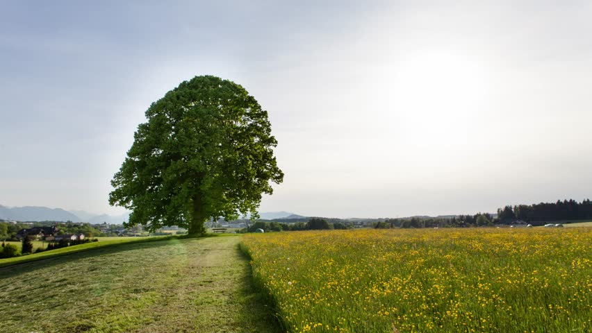 A timelapse showing  a big tree during the  4 weather seasons in austria, filmed over a period of one year | Shutterstock HD Video #13591325