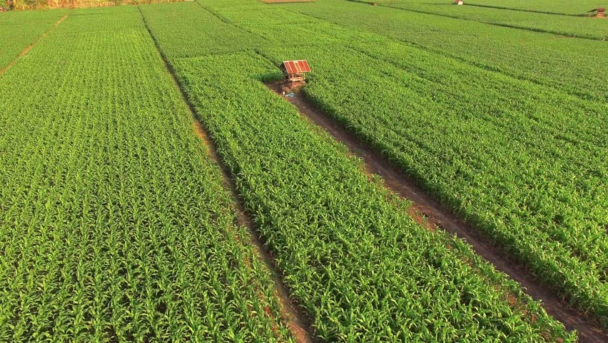 global expansion in brazil corn farming A glance at brazil's agricultural future clay hamilton tends to describe us and brazil agriculture using a especially port improvement and expansion.