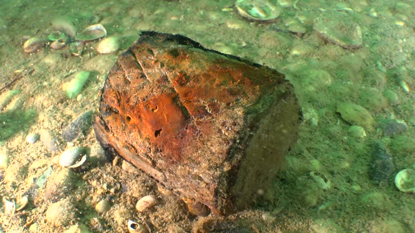 Hand grenade from World War II at the bottom near the wreck.