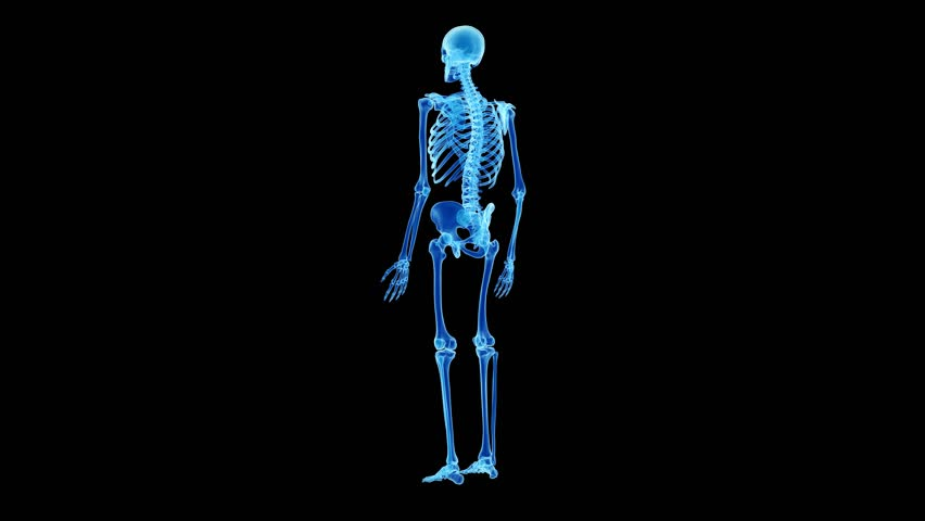 human skeleton joints animation – citybeauty, Skeleton