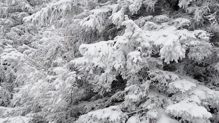 Header of fir tree