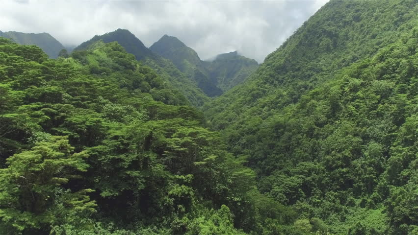 4K AERIAL: Flying above beautiful lush green jungle with palm trees and dense acacia trees growing on big mountains on tropical island in sunny summer