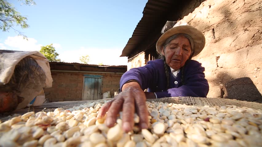 video footage of a old farmer woman that is drying corn in the sun in her farm. Scene from the Andes of Peru round about 4 hours away from Cusco. CUSCO, April 2014.