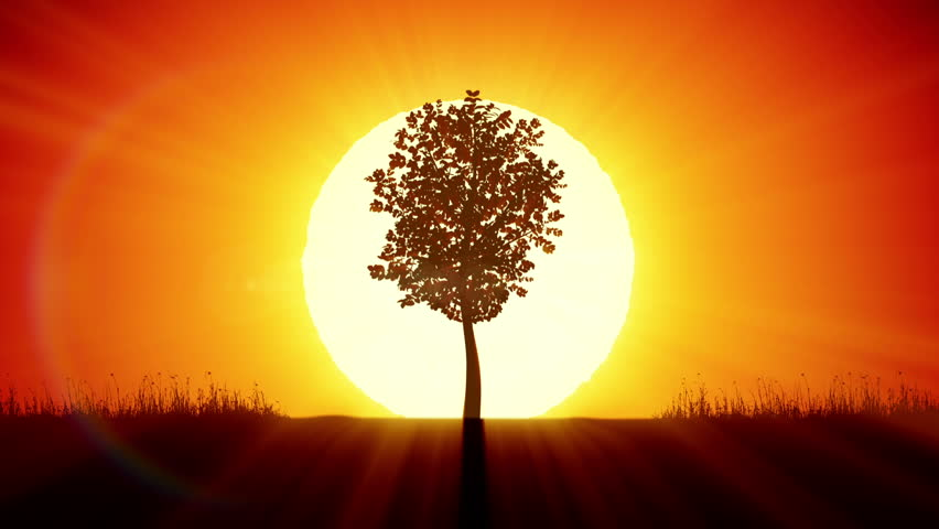 Beautiful Sunrise and Growing Tree. Achievement and Progress Concept 3d animation. Rising Sun Gives New Life. HD 1080.