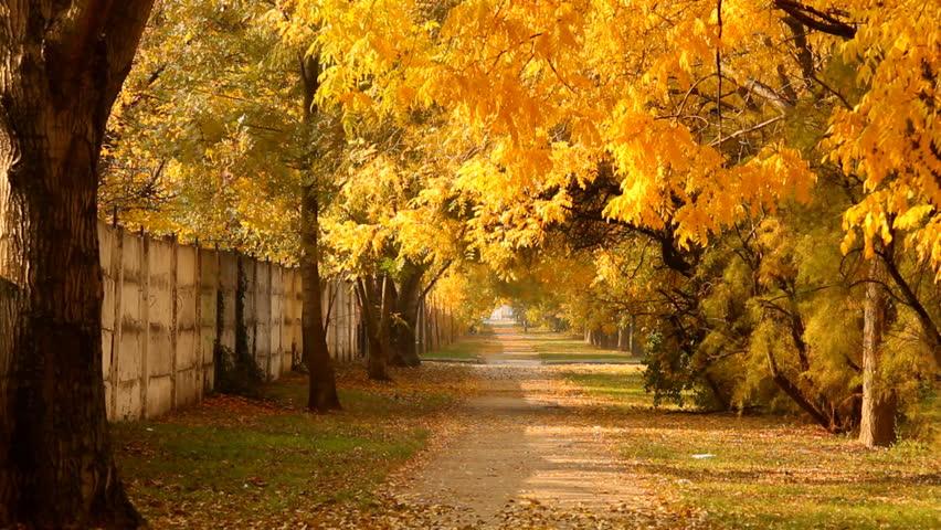 Autumn City Park Stock Footage Video 2911906 | Shutterstock