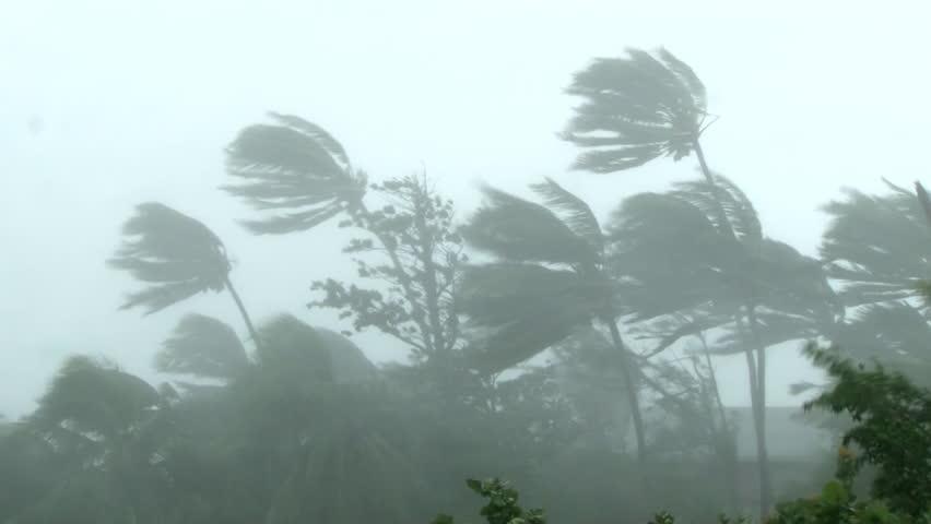 Hurricane wind blows through palm trees