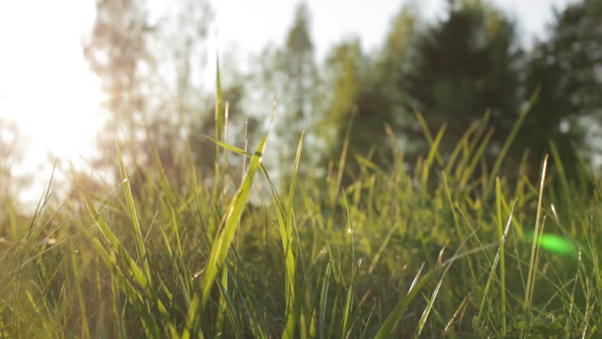 sunlight on the grass essay Something old, something new by leila aboulela is the final story in the aqa short story anthology, sunlight on the grass essay question.
