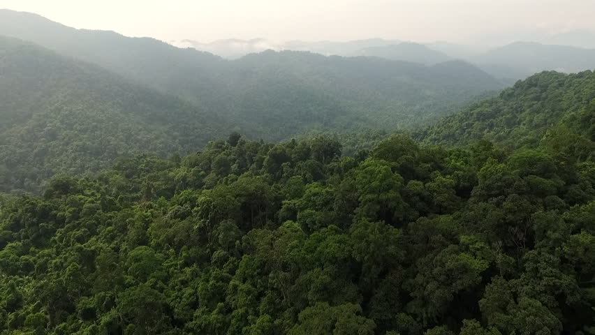 Aerial video above tropical forest in a sunny day