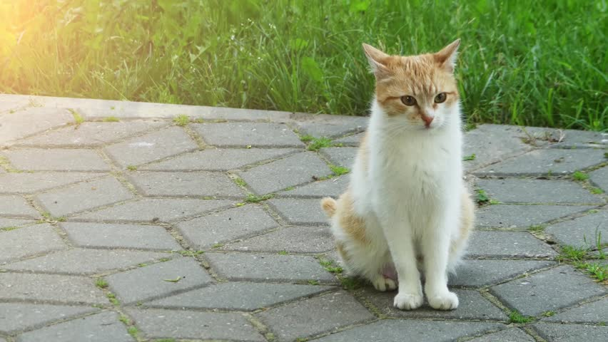 an overview of the small carnivorous animal felis catus Cats are family 10k likes community the domestic cat (felis catus or felis silvestris catus) is a small, usually furry, domesticated, and carnivorous mammal.