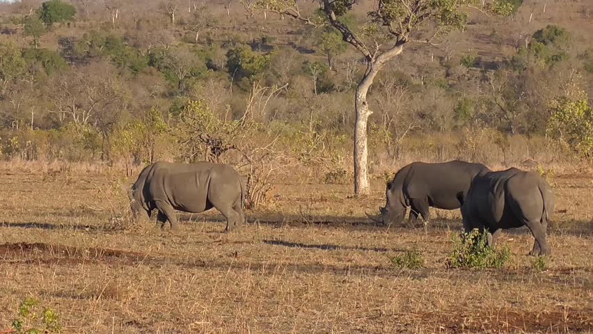 case 27 rhino capture in kruger national park in crafting executing strategy Crafting and executing strategy : this edition provides an unparalleled case line up of 28 cases 25 of the 28 cases rhino capture in kruger national park.