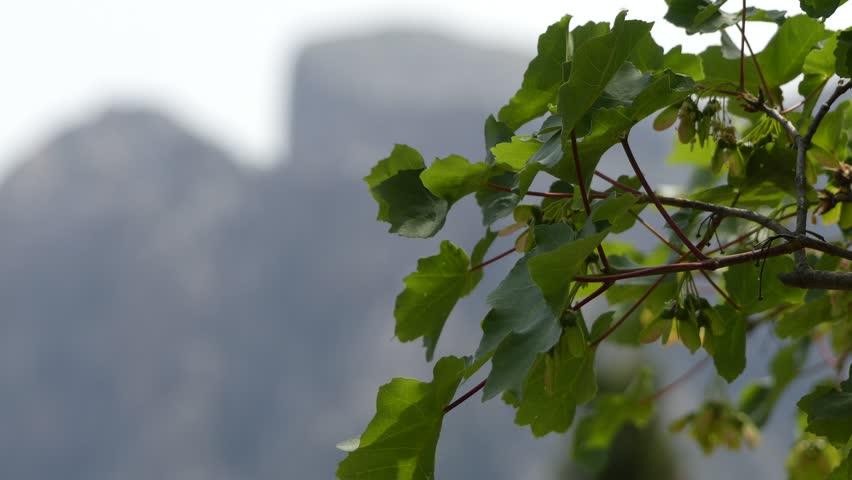 Header of Sapindaceae