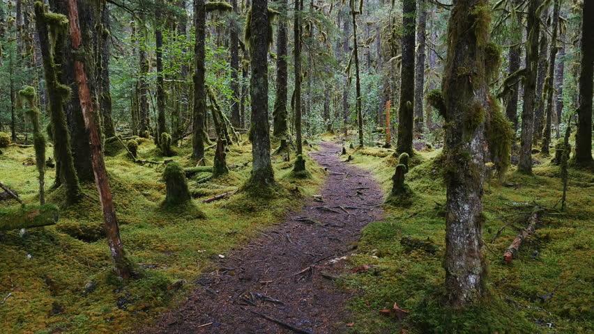 RAIN FOREST NEAR GUSTAVUS ALASKA - AUGUST 2016: POV-Walking pathway through a moss covered Alaskan rain forest on a gloomy, cloudy, rainy day - gyro stabilized.   Shutterstock HD Video #19143817