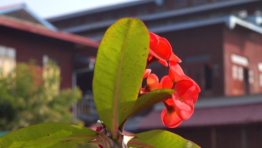 Header of Euphorbiaceae