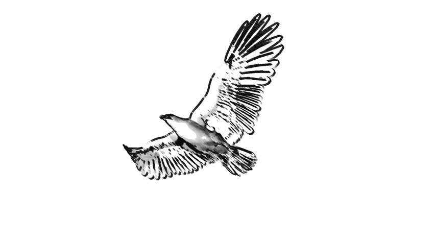 loop animated flying sketch eagle on isolate white