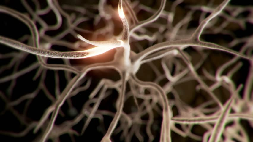 Active neuron cell in human brain emits pulses of energy. | Shutterstock HD Video #19495699