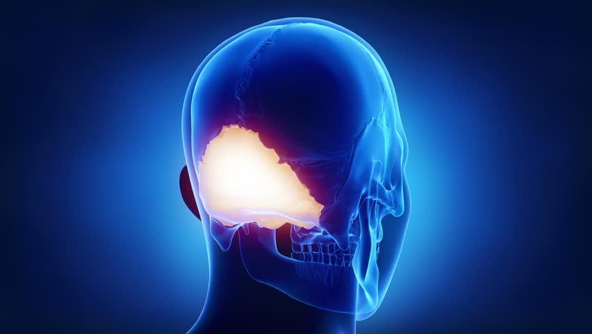 Blue x-ray skull animation - Occipital bone - os occipitale | Shutterstock HD Video #19949365