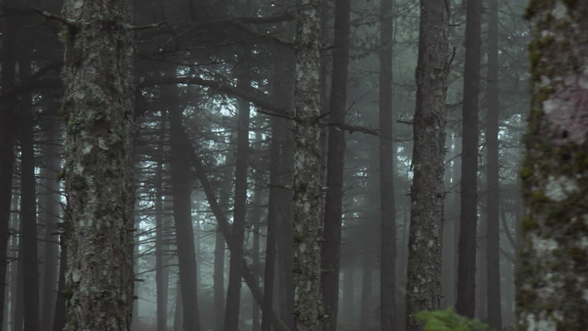 Pov driving passing by forest mountain pine trees surrounded in mist and fog.Pov point of view driving,view from inside the car of tall mountain forest pine trees at winter. | Shutterstock Video #20038642