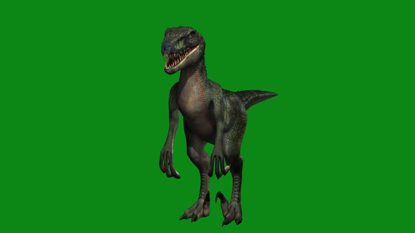 Dinosaur raptor idle with green screen animation | Shutterstock HD Video #20238112