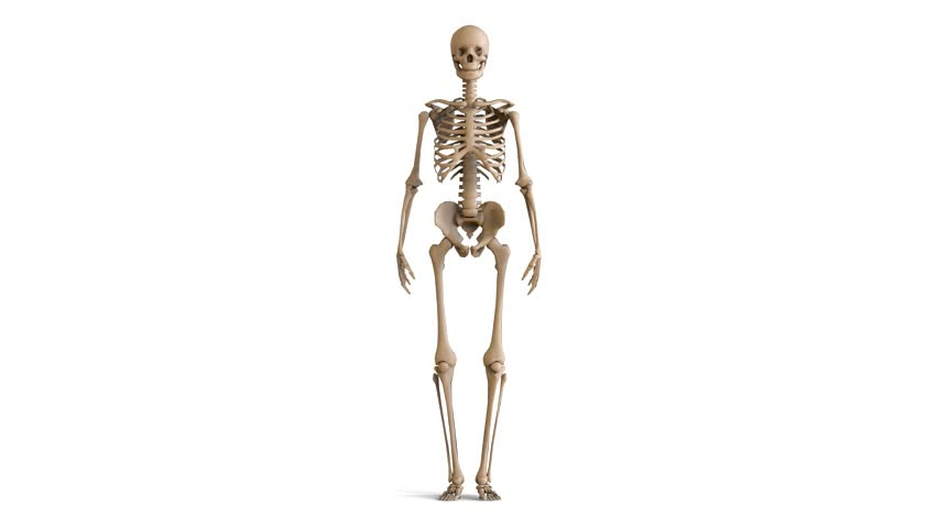 walking skeleton stock footage video 9591134 - shutterstock, Skeleton