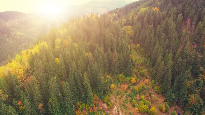 Aerial Drone Footage View: Flight over autumn mountains with forests, meadows and hills in sunset soft light. Carpathian Mountains, Ukraine, Europe. Majestic landscape. Beauty world. 4K resolution.   Shutterstock Video #21477814