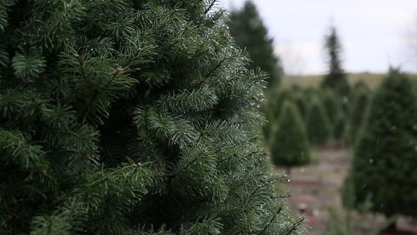 Top Christmas Tree
