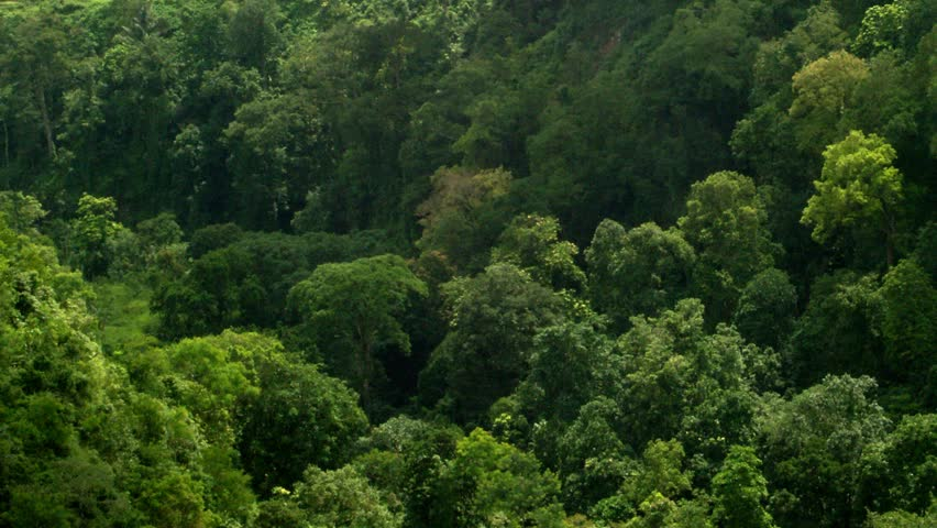Timelapse of shadows over tree tops.   Shutterstock HD Video #2204980
