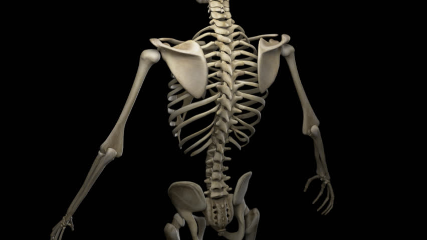 Complete close-up view of the Skeletal System. 3d animation of a human skeleton. Camera rotation from the top to the bottom, showing all the bones of the skeletal system.  Alpha channel embedded.