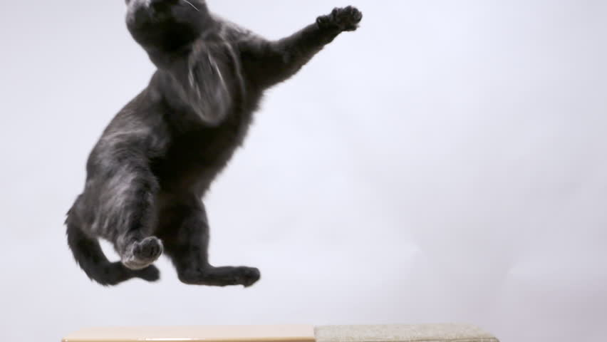 Gray cat playing with mouse toy on a string sequence of jumps in slow motion | Shutterstock HD Video #22810225