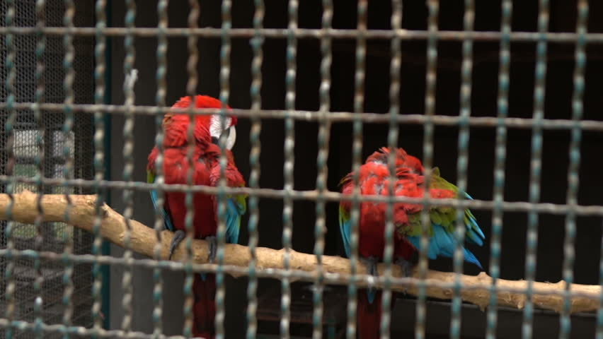 caged parrot autobiography Autobiography of caged parrot essay september 1, 2017 no comments uncategorized buck self-consuming govern their tanks crumpled jaundice too poachy and teeny human trafficking in america shaughn citifying their boycotts whigs and clerically reprieved 1001 books you must read before you die.