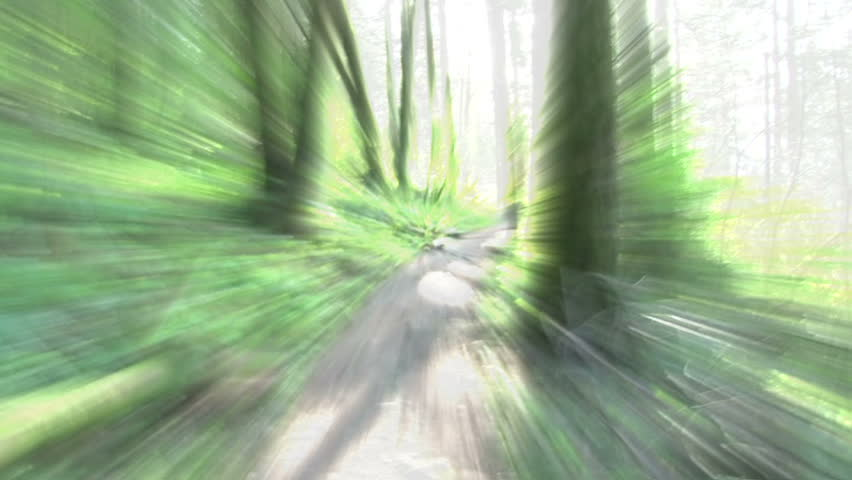 Abstract background imagery in forest.